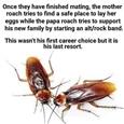 poppa roaches