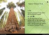 ymtc_vogongc_sequoia_national_park