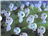 Wayori's avatar