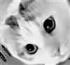 Drewbydooby311's avatar