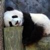 SleepyTimeGamers's avatar