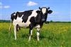 Cows546's avatar