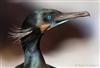 BigBird's avatar