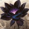 Black Lotus's avatar