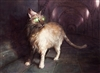 Dullvampire's avatar