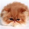 jhouse1337's avatar