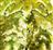 Ludafish's avatar