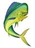 MahiBoat's avatar