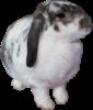 Kensairabbit37's avatar