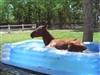 Ponypuddle's avatar